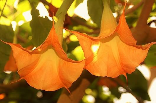 Orange Glory by Jessica Wallace