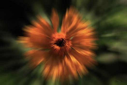 Orange Gold Blast Flower by Andrea Lawrence