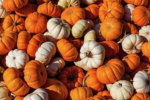 Orange Gourds by David Oakill