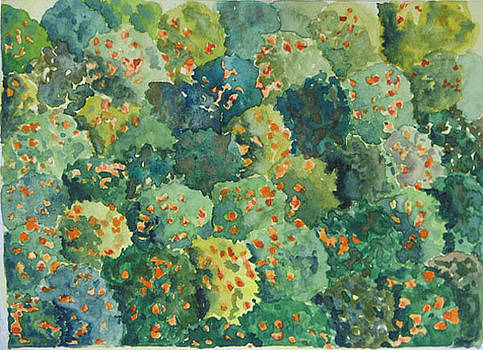 Orange Grove - Sketchbook by Libby  Cagle