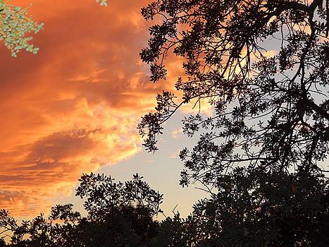 Orange Heaven  by Susan Ince