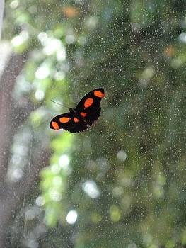 Orange is the New Black Butterfly by Mozelle Beigel Martin