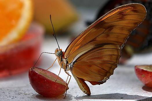 Orange Julia Butterfly by Debi Dalio