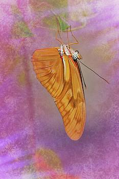 Orange Julia by Winnie Chrzanowski