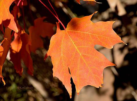 Orange Leaf of Autumn by Kae Cheatham