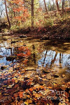 Orange Leaves by Iris Greenwell