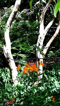 Orange Lilies by Nikki Dalton