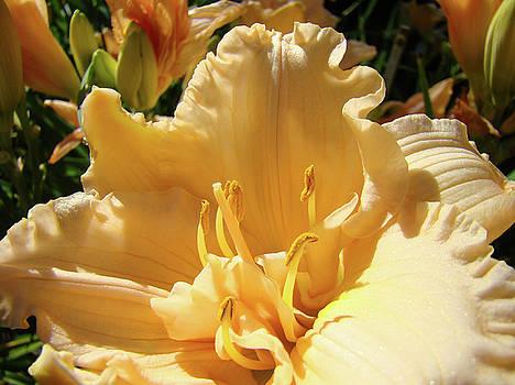 Baslee Troutman - Orange Lily Flower Floral art prints Baslee Troutman