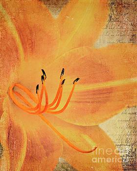 Orange Lily by Pam  Holdsworth