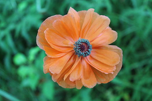 Orange by Lora Hall