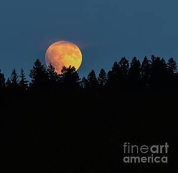 Orange Moon Behind the Pines by Beth Riser