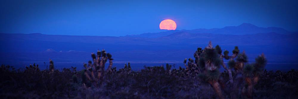Orange Moon by Robert Melvin