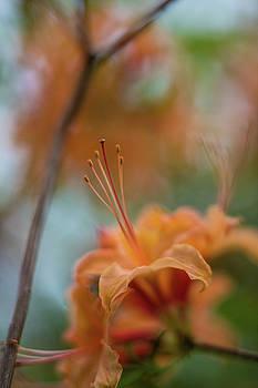 Mike Reid - Orange Mystery