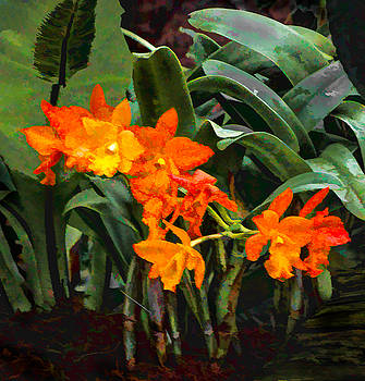 Orange Orchids by Jan Hagan