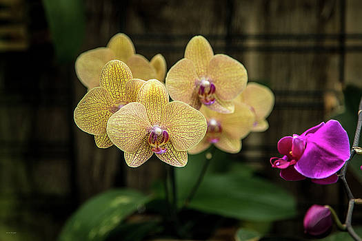 Orange Orchids by Ross Henton