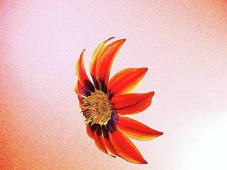 orange Petal by Nereida Slesarchik Cedeno Wilcoxon