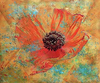 Orange Poppy by Catherine Jeltes
