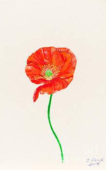 Orange poppy by Stefanie Forck