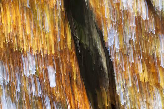 Orange Rain by Karen Van Der Zijden