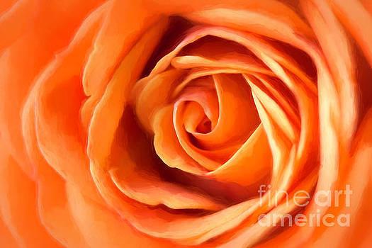 Orange Rose by Cindi Ressler
