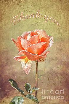 Orange Rose by Elaine Teague