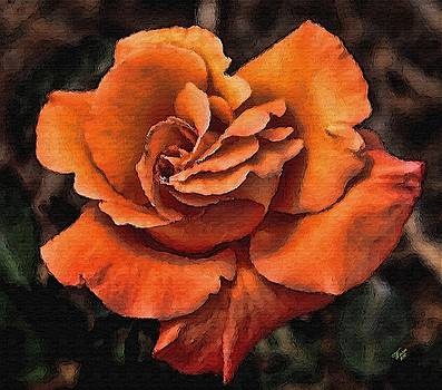 Orange Rose by John Winner