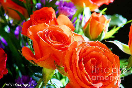 Orange Rose by Marty Gayler