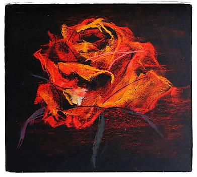 Orange rose by Natalia Stahl