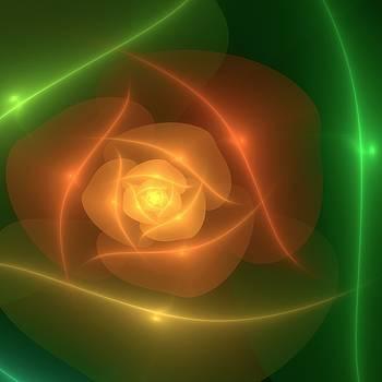 Orange Rose by Svetlana Nikolova