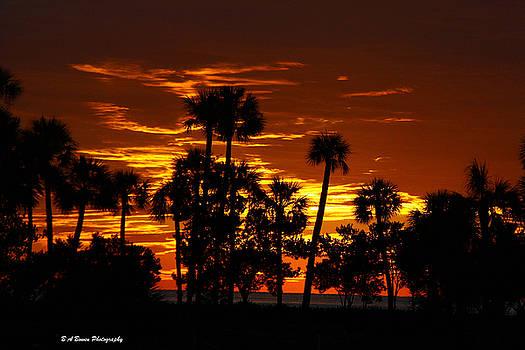 Barbara Bowen - Orange Skies