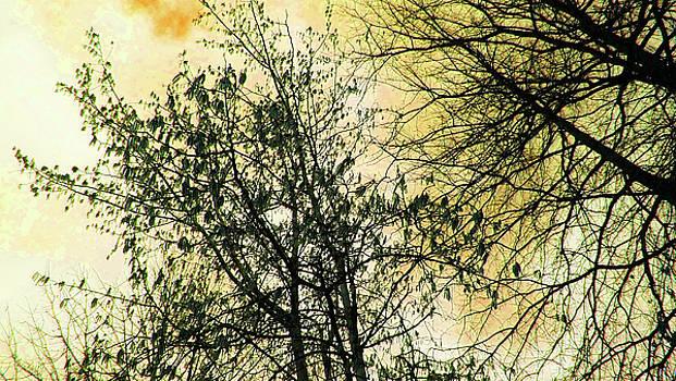 Orange Sky by Tommy Carhart