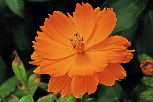 Orange Smile by Bill Morgenstern
