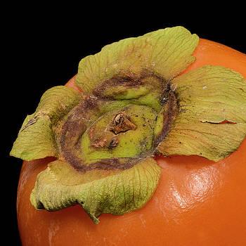 Vyacheslav Isaev - Orange persimmon