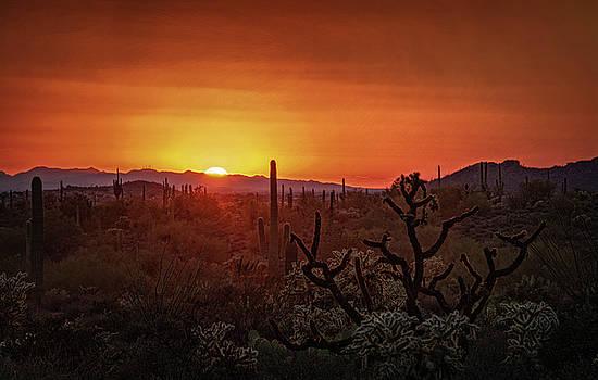 Saija Lehtonen - Orange Sonoran Skies