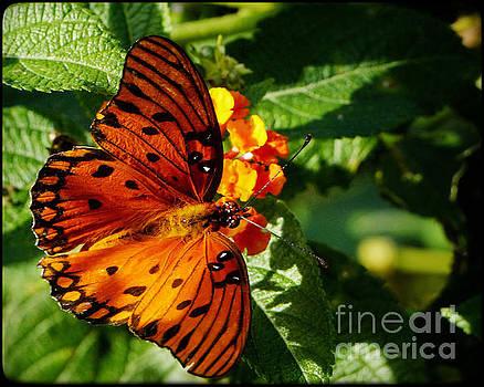 Orange Splendor by John Eide