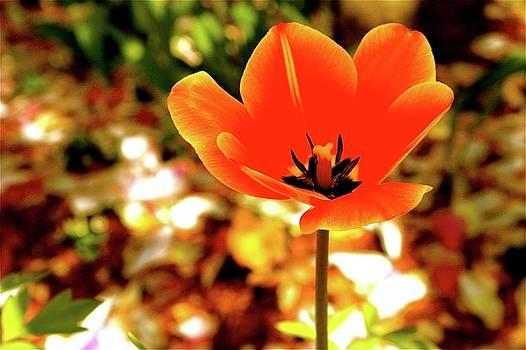 Orange Spring Flower by Natalia Radziejewska