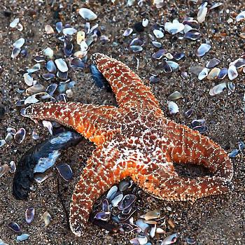 Art Block Collections - Orange Starfish