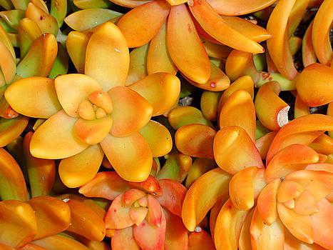 Robert Meyers-Lussier - Orange Succulents