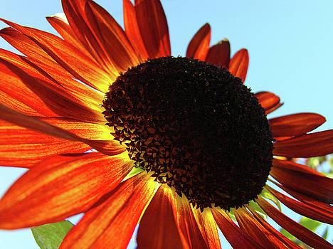 Baslee Troutman - Orange Sunflower Garden art prints Baslee Troutman