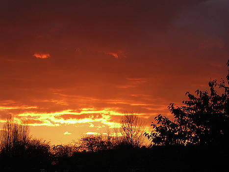 Orange Sunset 1 by Carol Lynch