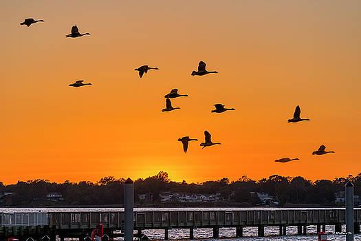 Orange Sunset - Bill Burton Pier by Brian Wallace