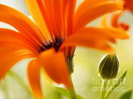 Orange Symphony On A Warm Spring Day 3 by Dorothy Lee