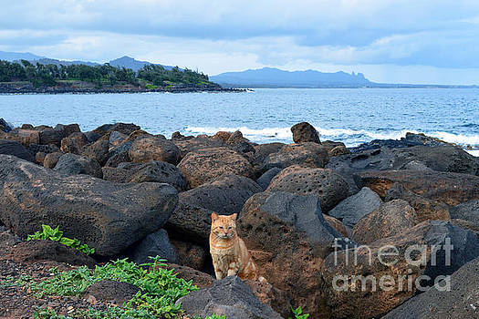 Orange Tabby Kauai Cat by Catherine Sherman
