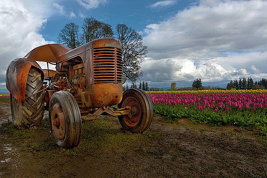 Orange Tractor at Tulip Field by David Gn