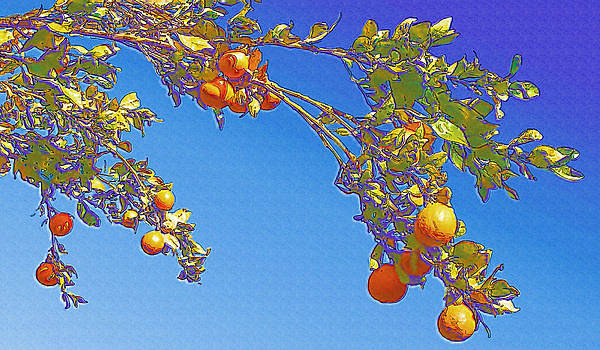 Robert Bissett - Orange Tree - Ojai