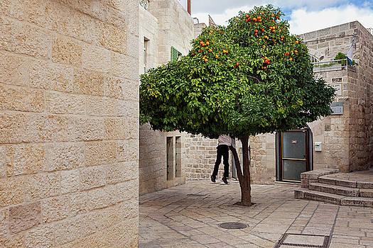 Orange Tree by Marji Lang