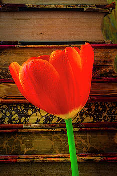 Orange Tulip And Old Books by Garry Gay