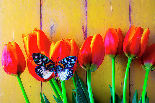 Orange Tulips And Stunning Butterfly by Garry Gay