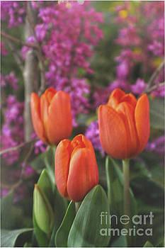 Sandy Moulder - Orange Tulips