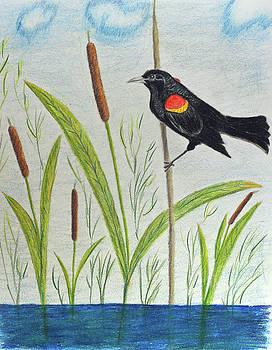 Orange-winged Blackbird by Lisa Von Biela